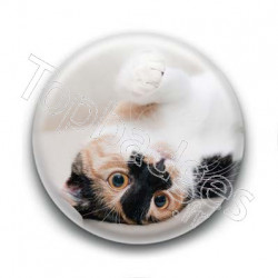 Badge Chat Tâcheté