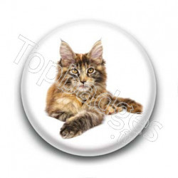 Badge Chat Maine Coon