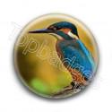 Badge Oiseau Martin-Pêcheur