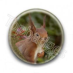 Badge Ecureuil