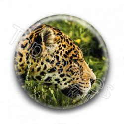 Badge Jaguar