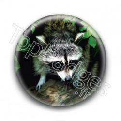 Badge Raton Laveur